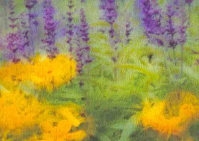 14purple flowers